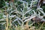 HSNP Tufa Terrace Trail Frost