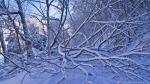 HSNP Grand Promenade Snow Fallen Tree