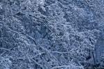 HSNP Grand Promenade Snow