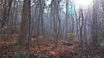 HSNP Floral Trail Fog