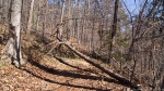HSNP Lower Dogwood Trail Fallen Tree