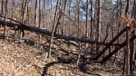 HSNP Upper Dogwood Trail Fallen Tree