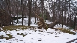HSNP Fountain Trail Fallen Tree Snow