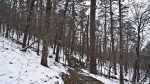 HSNP Hot Springs Mountain Trail Snow