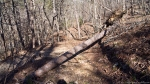 HSNP Floral Trail Downed Tree