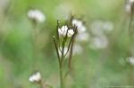HSNP Wildflowers