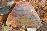 HSNP Floral Trail Colorful Rock