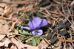HSNP Hot Springs Mt Trail Violet