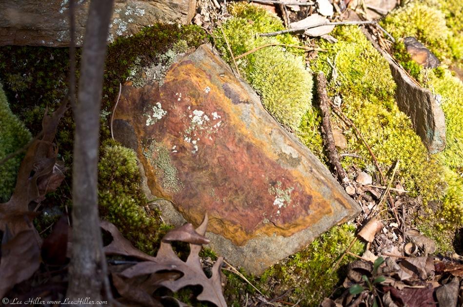 HSNP Lower Dogwood Colorful Rock Moss