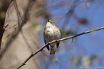 HSNP Oak Trail Yellow-Rumped Warbler