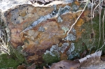 HSNP Gulpha Gorge Trail Lichen Rock