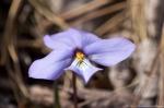 HSNP Gulpha Gorge Trail Brids-Foot Violet