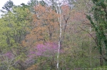 HSNP Arlington Lawn Spring Trees