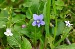 HSNP Promenade Wooly Blue Violet
