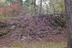 HSNP Fountain Trail Redbud Tree