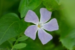 HSNP Carriage Road Periwinkle