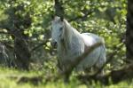 HSNP Ricks Fordyce Pond Horse