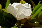 HSNP Bath House Row Southern Magnolia