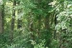 Malvern, AR Forest