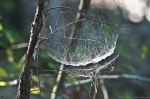 HSNP Hot Springs Mt Trail Spider's Web