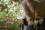 Cedar Glades Park Blue Trail Fungus