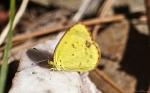Cedar Glades Park Blue Trail Sulphur