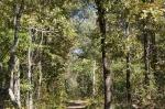 HSNP Forest