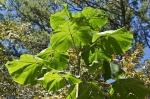HSNP Tropical Plant