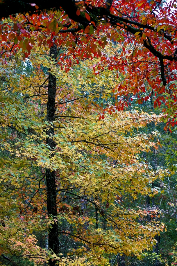 HSNP Hot Springs Mountain Road Autumn Hot Spring National Park, Arkansas