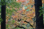 HSNP Hot Springs Mt Trail Green Orange Autumn Leaves