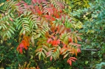 HSNP Hot Springs Mt Trail Green Orange Autumn Leaves Ornamental Bamboo