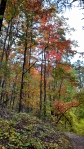HSNP Hot Springs Mt Trail Orange Autumn Leaves