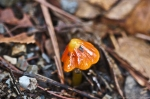 HSNP Peak Trail Autumn Fungus