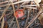 CGP Colorful Autumn Fungi