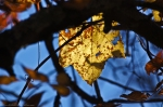 HSNP Gulpha Gorge Trail Autumn Leaves