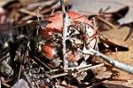 SONY DSCHSNP Gulpha Gorge Trail Autumn Fungus