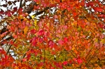 HSNP Lower Dogwood Trail Autumn Leaves Red and Orange