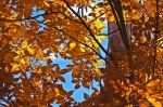 HSNP North Mountain Autumn Leaves Rust