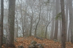 HSNP Hot Springs Mountain Trail Fog