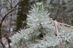 HSNP Peak Trail Iced Pine