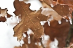 HSNP Peak Trail Iced Rust Leaf
