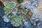 HSNP Hot Springs Mt Trail  Rock Lichen