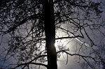 HSNP Hot Springs Mountain Trail Tree Silhouette