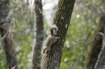 HSNP Carriage Road Squirrel with Nut