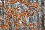 HSNP Peak Trail Iced Leaves