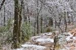 HSNP Peak Trail Iced