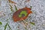 HSNP Promenade Frozen Leaf