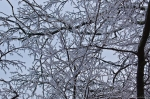 HSNP North Mt Loop Frosted Ice Covered Branches