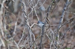 HSNP Upper Dogwood Trail Tufted Titmouse