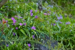 HSNP Tufa Terrace Trail Spiderwort